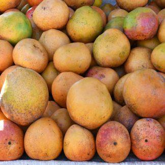 mango afrika