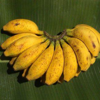 banane apfel ambul