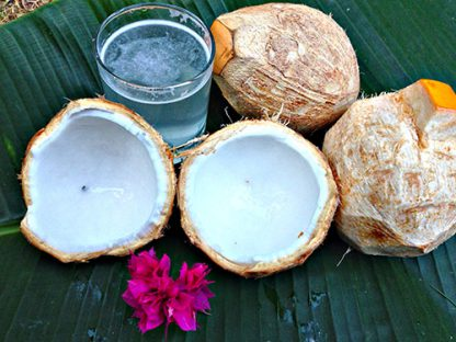 pagode junge kokosnuss