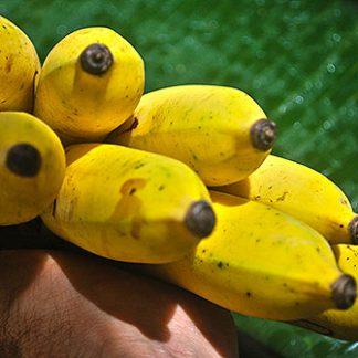 Banane Suwandel
