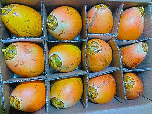 Kokosnusspaket mit 12 x Königs-Trinkkokosnuss