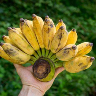 thai banane