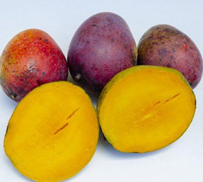 irwin mango