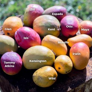 Früchte aus Afrika, Portugal und Spanien. Wöchentliche Lieferung