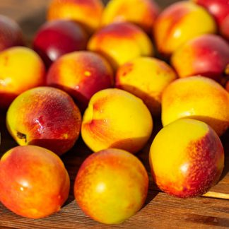 nektarinen gelb